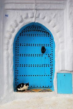 Come here little kitty kitty kitty. Blue door, Morocco.