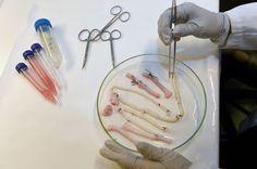 Growing a Blood Vessel in a Week - http://scienceblog.com/74973/growing-blood-vessel-week/