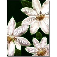 Trademark Art White Clematis Canvas Art by Kathie McCurdy, Size: 24 x 32, White
