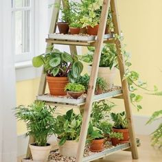 Creative Plant Stands A Frame Wooden With Natural Wood Brown Finish Plant Stand Subtle With Light Brown Floor Parquet  a part of Creative Plant Stands A Frame Wooden With Natural Wood Brown Finish Plant Stand Subtle With Light Brown Floor Parquet  under Decorations