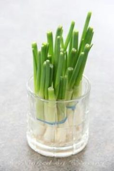 Green onions in water will regrow!!!
