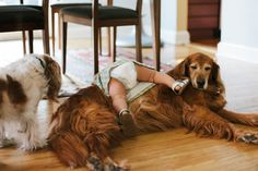 Your dog can offer life lessons, if you're paying attention. To celebrate National Pet Month, here are 10 house-hunting lessons your dog can teach you. Dog Pictures, Animal Pictures, Real Estate Articles, Fall Over, Home Buying Tips, All In The Family, Selling Real Estate, Pretty Pictures, Your Dog