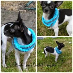 MandaLynn's Crochet Treasures : Crochet Infinity Scarf for Pup- Free Pattern 5 siz...