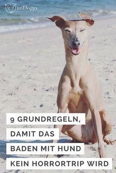 Baden | Schwimmen | mit Hund | Tipps | Ideen | Regeln