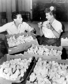 Lucy & Desi and Baby Chicks    Lucille Ball and Desi Arnaz on the set of the…