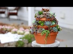 Succulent Tower 🌿// Garden Answer - YouTube Propagating Succulents, Succulent Gardening, Succulent Pots, Planting Succulents, Container Gardening, Planting Flowers, Plant Tower, Tower Garden, Kalanchoe Blossfeldiana