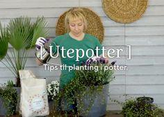 Slik planter du i krukkene Planters, Tips, Plant, Window Boxes, Pot Holders, Flower Planters, Pots, Counseling