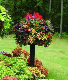 Planter on a birdbathlooks like a topiary.