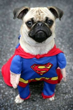 Cute Superman