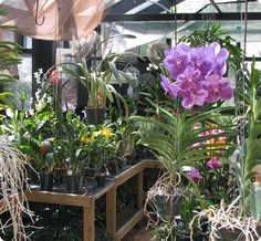 Inside Orchid Greenhouse