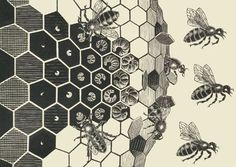 "courier5:  Detail from ""Metamorphose II"", Maurits Cornelis Escher (1898 - 1972) Woodcut in three colors, 19 × 389.5 cm"