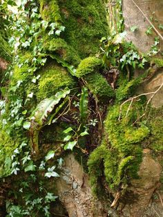 Moss http://misi.co.uk/gifts/81250/Abstract_Moss.html