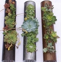 Succulent Cylinder - Small.jpg