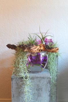 Beates-Kreative-Welten: Tillandsien, Luftpflanzen