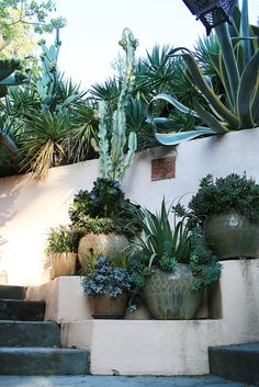 Awkward spot that was made for accent succulents and pots | Flickr - Photo Sharing!