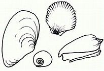 Seashell Drawing - Bing images