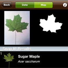 Leaf Snap: FREE  This free mobile app uses visual recognition software to help identify tree species from photographs of their leaves.