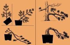 Znalezione obrazy dla zapytania зимовка бонсаи подогрев