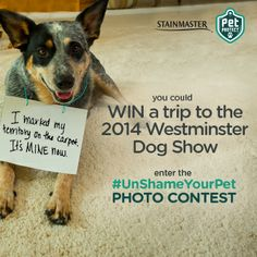 STAINMASTER® is hosting an #UnShameYourPet photo contest on our Facebook Page. First prize is a trip for two to New York City to attend the 138th Annual Westminster Kennel Club Dog Show. To enter visit STAINMASTER® Facebook Page. #contest #dogs #UnShameYourPet #photocontest #Westminster https://www.facebook.com/STAINMASTER