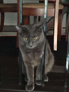 Lost Cat - Unknown - Toronto, ON, Canada M9V 3K8
