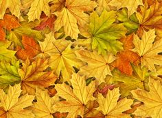 Autumn is a second spring where every leaf is a flower. This autumn leaf wallpaper covers your wall with fall hues. Samsung S6 Edge, Autumn Leaves Wallpaper, Unique Wallpaper, Botanical Wallpaper, Leaf Images, Walk In The Woods, Patterns In Nature, Natural Wonders, Wall Murals