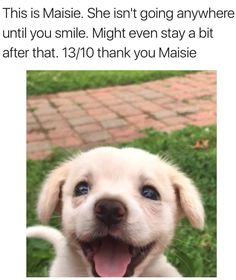 50 Cute & Funny Dog Memes That'll Get Your Tail Wagging Dogs say or think the darndest things. Here are some possible thoughts your dog may have. Cute Funny Dogs, Funny Dog Memes, Funny Animal Memes, Funny Animal Pictures, Cute Funny Animals, Funny Photos, Funny Kitties, Funny Pugs, Adorable Kittens
