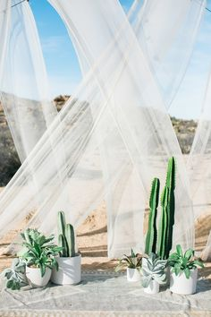 At this desert wedding, the potted cacti almost feel like they're part of the natural landscape. Add in sheer draping and a bohemian rug accent for the perfect ceremony set-up.