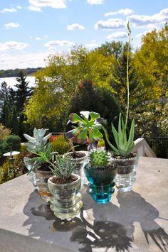 DIY - Succulent Planters from Glass Insulators
