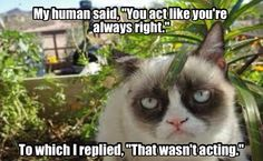 * * HOW TO GET AROUND THIS ONE?  THE HUMAN COULD'VE SAID: ' YOU BEHAVE LIKE YOU'RE ALWAYS RIGHT.'