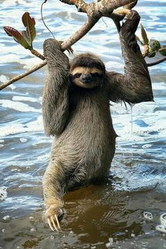 """All right, already! I'll take a bath, but I am too tired too completely submerge myself."" ~sloth"