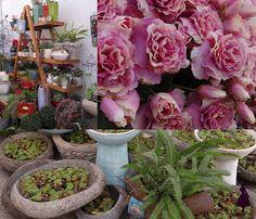 Flor de loto y Artificio florería (las flores rosadas).