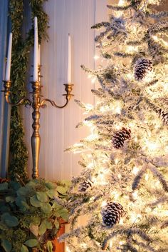 FRENCH COUNTRY COTTAGE: A perfect tree