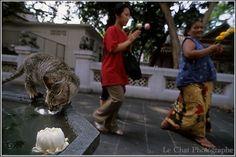 la fleur ,le chat et les Thaïlandaises