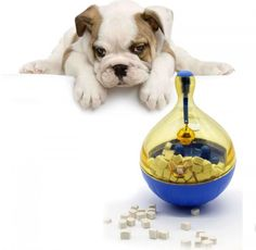 Cheap puppy bowl, Buy Quality dog feeder bowl directly from China dog bowl Suppliers: Tumbler Pet Dog Cat Feeder Funny Toy Snack Holder Self Feeding Toy Puppy Game Bowl New Design and Carton Package Funny Dog Captions, Pets Online, Cat Feeder, Dog Bag, Funny Toys, Buy Pets, Toy Puppies, Dog Feeding, Pet Beds
