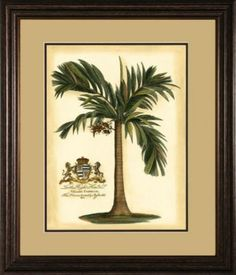 Accessories, Colonial Palm Framed Art I, Accessories | Havertys Furniture