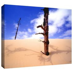 'Oregon Dunes Noon' by Dean Uhlinger Photographic Print Gallery-Wrapped on Canvas