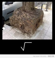 Funny pictures about Square root. Oh, and cool pics about Square root. Also, Square root photos.