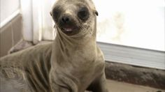 PACIFIC MARINE MAMMAL CENTER RECEIVES $10K DONATION TO HELP SICK SEA LIONS