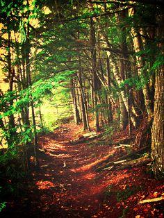 Camp Nawakwa hiking trail