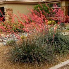 10 Fuss-Free Plants for the Summer Garden - Ramblings from a Desert Garden Texas Landscaping, Front Yard Landscaping, Backyard Landscaping, Landscaping Ideas, High Desert Landscaping, Natural Landscaping, Texas Gardening, Desert Gardening, Landscape Arquitecture
