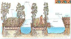 Ancient Aquaponics: Aztec Chinampas