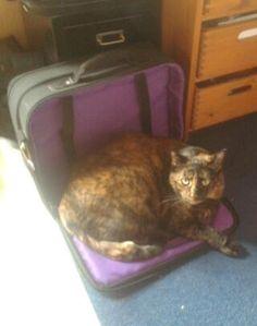 meine Gretchen Katze | Pawshake Ostfildern