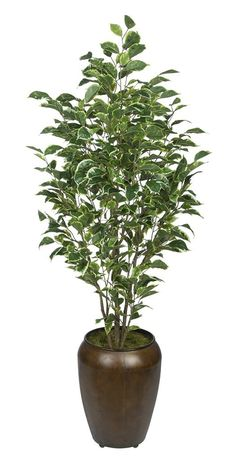 Artificial Ficus in Smooth Brown Metal (Variegated) -- Click on the image for additional details.