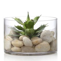 Kelly Hoppen Faux Cactus in a Cylinder Vase