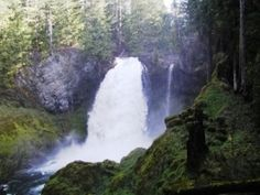(Sahalie Falls) A list of all the campgrounds in the Willamette National Forest (Oregon)