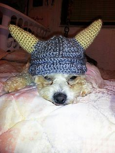 Dragon costume for dogs dinosaur dog mask dog dragon cat house the hat fits large and medium size dogs nicely it can also fit most small ccuart Images