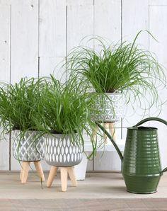 10+ ideas de Macetas para plantas Cerámica porcelana