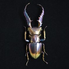 Sculptures of Beetles Covered in Minerals by Nozomi