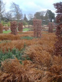 Winter Wisley