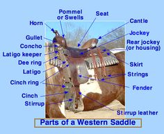 PARTS OF A SADDLE - oh jeez...here we go again!